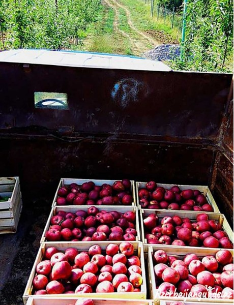 Agritour to Quba - tour to the apple farm